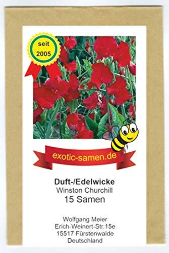 Duftwicke - Edelwicke - Bienenweide – Winston Churchill – Schnittblumen - bis 180 cm - 15 Samen