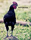 College Ruled Notebook: Laying Hen Colorful Composition Book Daily Journal Notepad Diary for Researching Chicken Coop For Sale Near Me