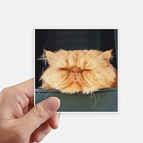 DIYthinker Pousse Funny Animal Chat Jaune Autocollant carré de 10 cm Mur Valise pour Ordinateur Portable Motobike Decal 8Pcs 10cm x 10cm Multicolor