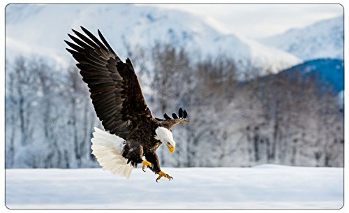 Adler Vogel Schnee Winter Wandtattoo Wandsticker Wandaufkleber R1046 Größe 60 cm x 90 cm