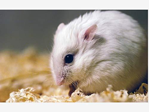 AMDPH Weißer Hamster 5D Diamant Malerei Bohrmaschine DIY Mosaik Kreuzstich Strass Stickerei Wohnzimmer Dekor Wandkunst Handarbeit Kit Handgemacht