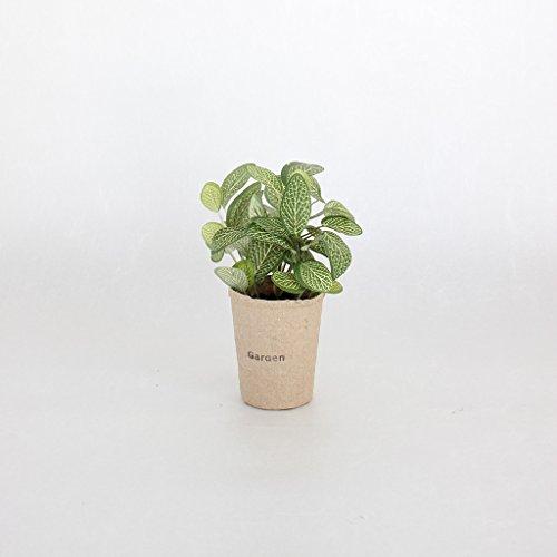 Time Concept Decor - Planta de Imitación con Maceta de Papel – Miniatura Artificial para Interior y hogar