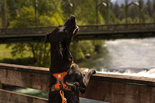 Embark Pets Arnés para Mascotas Grande (79-104 cm, Naranja ...