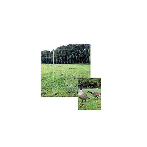 Göbel d'alimentation Euro volaille 25 m de long 112 cm de haut pas stromführend 9 Piquets simple pointe Vert