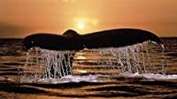 日没時の水の中のクジラ1000ピースジグソーパズル 木製ジグソー大人の子供脳チャレンジ