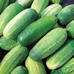 Vegetable - Kings Seeds - Paquet Pictorial - Concombre - Gherkin