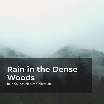 Rain in the Dense Woods