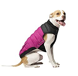 Short-Haired Dog wearing a pink and black Canada Pooch Summit Stretch Dog Vest.