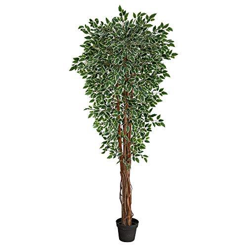 70in. Variegated Ficus Artificial Tree UV Resistant (Indoor/Outdoor)
