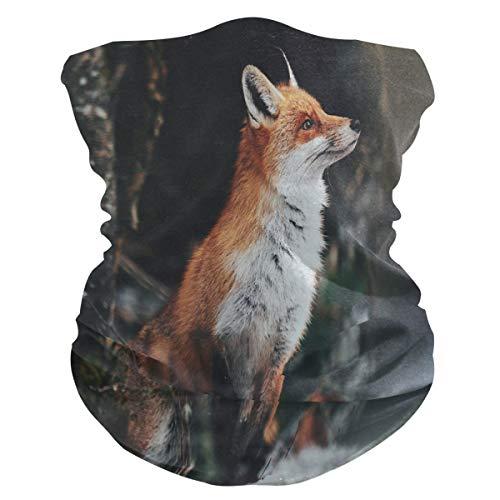 QMIN Stirnband Schöner roter Fuchs Wildwald Bandana Gesicht Sonnenschutz Maske Hals Gaiter Magic Schal Sturmhaube Kopfbedeckung für Damen Herren Jungen Mädchen