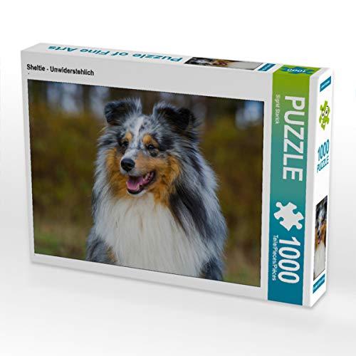 CALVENDO Puzzle Sheltie - Unwiderstehlich 1000 Teile Lege-Größe 64 x 48 cm Foto-Puzzle Bild von Sista-Tierfoto