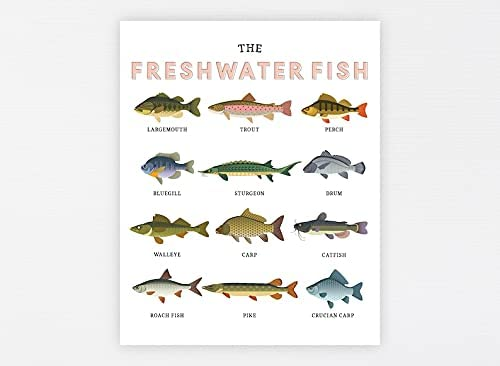 Freshwater Fish Year-end annual account Education High quality Printable Learning Homeschool · Montes