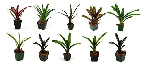 Bromeliad Bundle – 10 Plants