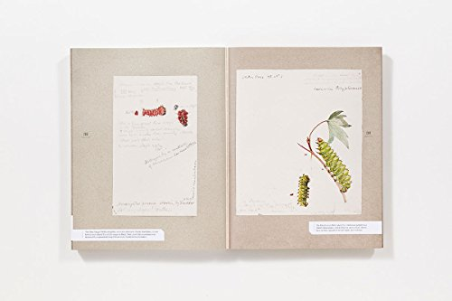 The Butterflies of North America: Titian Peale's Lost Manuscript