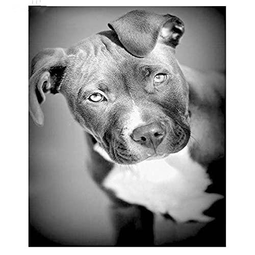 fancjj 1000 Piezas Rompecabezas/Stafford Bull Terrier Animal / 50x75cm / Rompecabezas 1000 Piezas Juego de Rompecabezas Grande para Adultos y Adolescentes