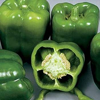 Amazon Com Colossal Hybrid F1 Sweet Bell Pepper Seeds 80 Seed Pack Garden Outdoor