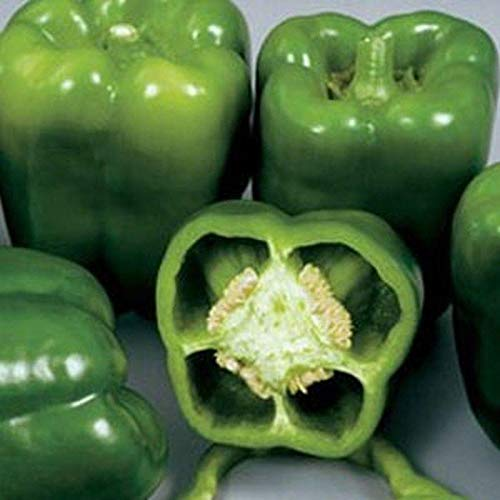 Colossal Hybrid F1 Sweet Bell Pepper Seeds (40 Seed Pack)