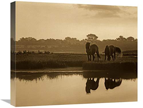 Global Gallery Par de Caballos Salvajes pastoreando en Assateague Island National Seashore, Maryland, Arte en Lienzo, 56 x 46 cm