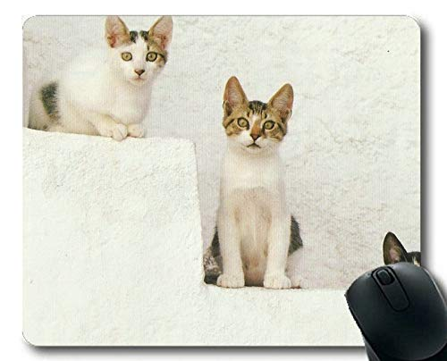 Yanteng Alfombrilla de ratón, Alfombrilla de ratón Kitten Photography Cat, Alfombrilla para computadora Cat167