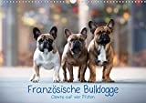 Französische Bulldogge - Clowns auf vier Pfoten (Wandkalender 2020 DIN A3 quer)