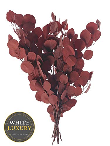 WHITE LUXURY - Eukalyptus Trockenblumen - hochwertig & ewige Haltbarkeit - getrocknete Blumen Eukalyptus getrocknet Trockenblumenstrauß - Pampasgras Trockenblumen Deko gefärbte Blumen (Rot)