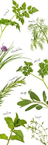 Plage 162271–Adesivo per cucine e Frigorifero Erbe aromatiche–Vinile 180x 0.1x 59,5cm, Multicolore