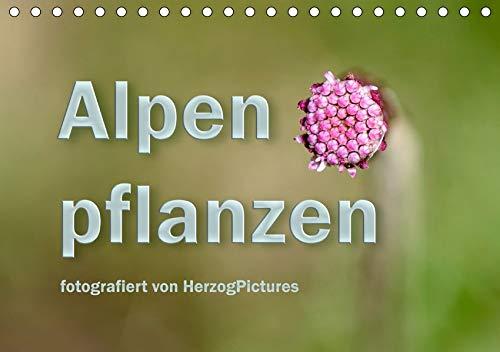 Alpenpflanzen fotografiert von HerzogPictures (Tischkalender 2020 DIN A5 quer): Impressionen von Alpenflanzen ganz nah (Monatskalender, 14 Seiten ) (CALVENDO Natur)