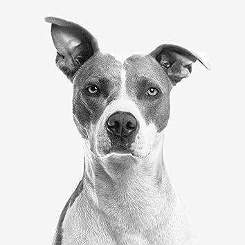 #Theta Waves for Dogs - Natural Sleep Aid