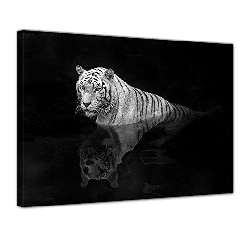"Bilderdepot24 Cuadros en Lienzo""Tigre blanco"" - 70x50 cm 1 pieza - Enm"
