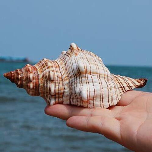 Muschelschale,Muscheldekorationen,Ozeandekor,Muschelschale,DIY Sukkulente Muschelblume Aquarium Aquarium Mediterrane Dekoration Mediterrane Muster Dekoration Handwerk 9-10CM LightGrey