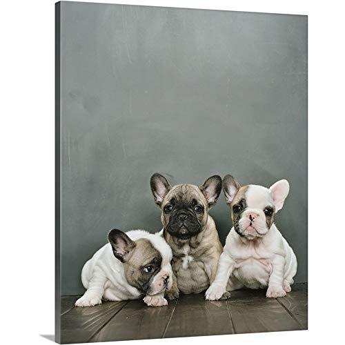 Three French Bulldog Puppies Sitting on Canvas Wall Art Print, Dog Artwork