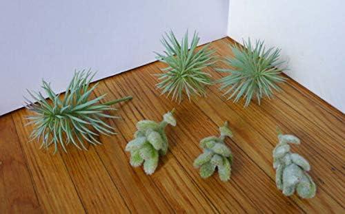 JOELLE Ranking TOP15 STORE Award 6 Artificial Succulents 3 Fl Mini Pine Gray tree