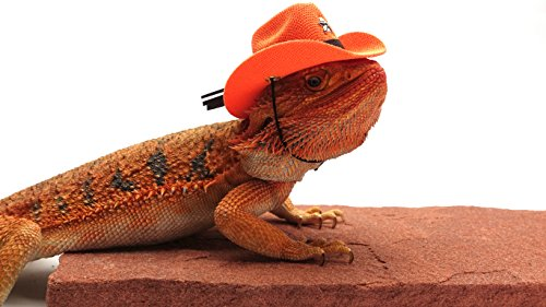 Carolina Designer Dragons Bearded Dragon Cowboy Hat, Orange