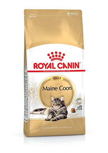 Maine Coon Adult 400g royal Canin ab 15 Monaten