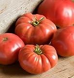 David's Garden Seeds Tomato Beefsteak German Johnson SL3815 (Red) 50 Non-GMO, Organic, Heirloom...