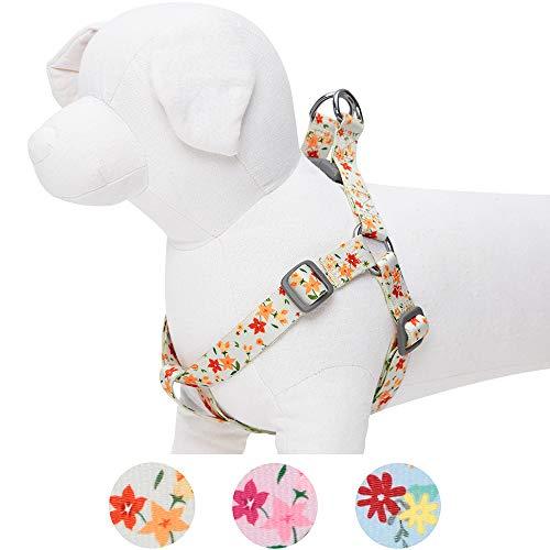 Umi. by Amazon - Made Well - Arnés perros estampado
