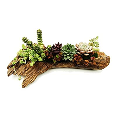 Succulent Planters Cactus Plant Pots Indoor Sam...