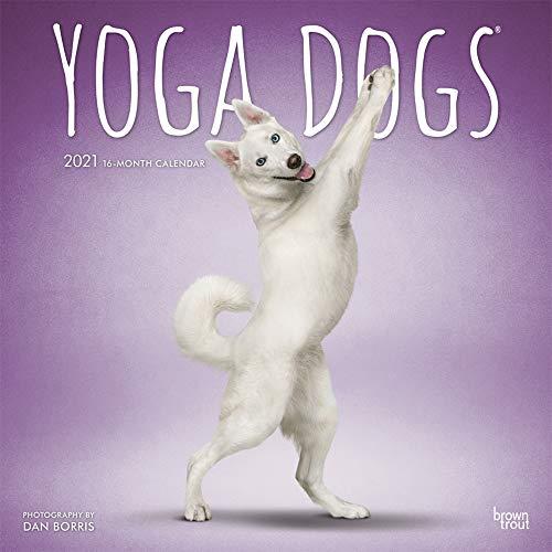 Yoga Dogs - Joga-Hunde 2021 - 16-Monatskalender: Original BrownTrout-Kalender [Mehrsprachig] [Kalender] (Wall-Kalender)