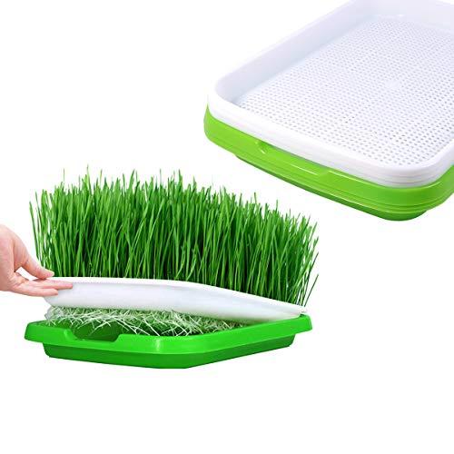 Huntfgold 3 Stück Seed Sprouter Tray Keimschale Sprossen Sämlinge Weizen Grassierer Pflanzer Hydroponics Dauerhaft Samen Keimung Tablett für Garden Home Office