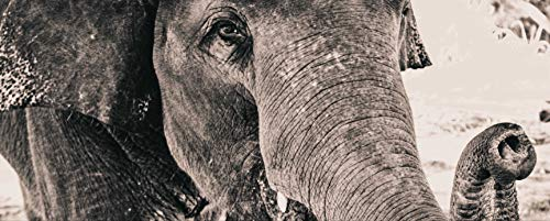hansepuzzle 75853 Panorama-Puzzle: Elefant, 2000 Teile in hochwertiger Kartonbox, Puzzle-Teile in wiederverschliessbarem Beutel.