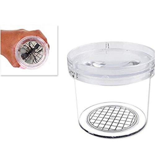 Beeinch Vergrößerung Bug Insect Viewer Box Transparente Optische Ameise Spinnenglas Für Kinder Lernspielzeug