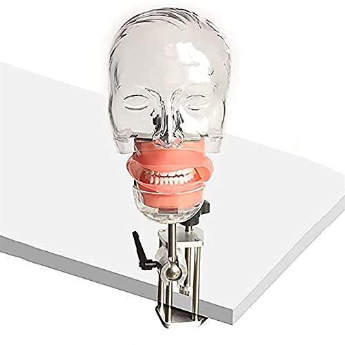 Modello di testa fantasma dentale, manichino fantasma dentale staccabile modello testa fantasma Simulatore di addestramento per denti-con custodia per attrezzature per l'addestramento del dentista