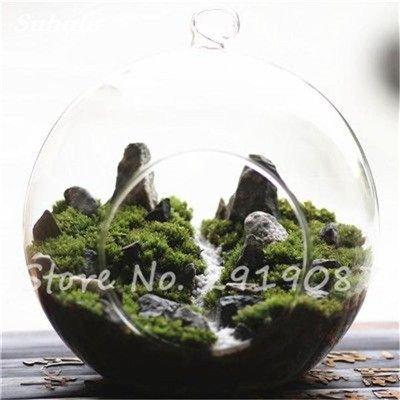 100 Pcs rares mousse verte Graines exotiques Graines Bonsai Moss Belle Moss Boule décorative Jardin créatif herbe Graines Plante en pot 19