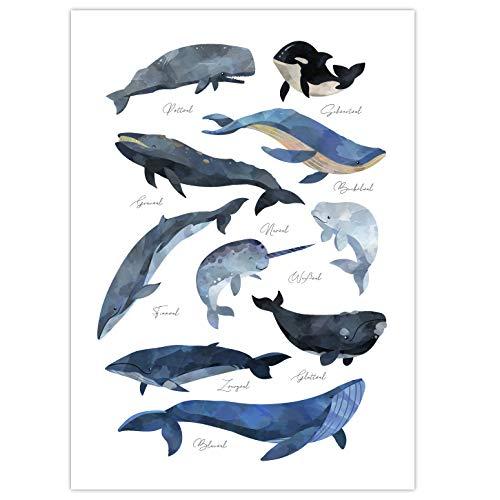 Pandawal Kinderzimmer Bilder für Junge und Mädchen Wale Poster Wal Bild Maritim Deko Lernposter für Kinder 50 x 70 cm Wandbild