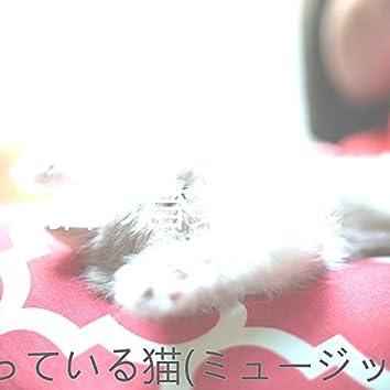 眠っている猫(ミュージック)