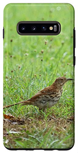 Galaxy S10+ Brown Thrasher Bird Beautiful Photo for Bird Lovers Case