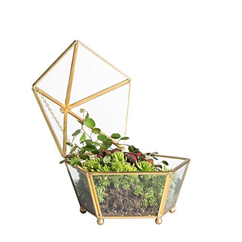 NCYP Vintage rame oro moderno in vetro trasparente con piede piccolo jewel-boxed pentagonale in vetro geometrico terrario display piante succulente fioriera Moss Fern con coperchio basculante.