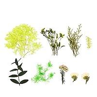 VALICLUD Diyドライフラワーの葉の香りの押し花樹脂工芸品バスソープキャンドル作り花花瓶フィラージュエリー作りスクラップブックアート花の装飾(緑)