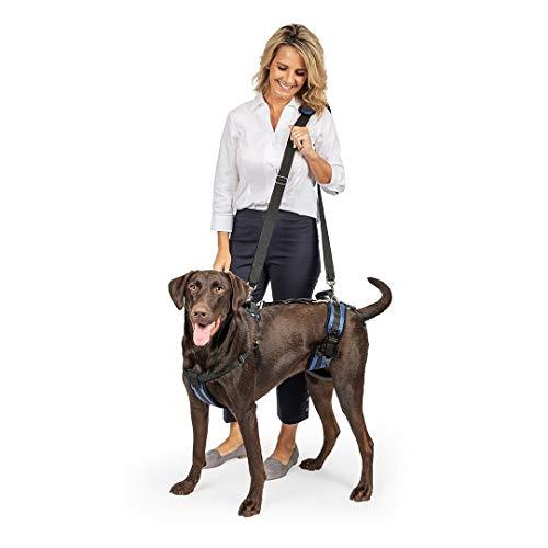 PetSafe Arnés de soporte CareLift - Ayuda para levantar el cuerpo completo con asa, Excelente para la movilidad de mascotas y perros mayores, Material cómodo y transpirable, Fácil de ajustar - Grande