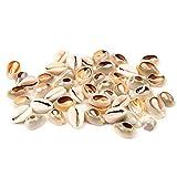 ZJSXIA Conchas de almeja naturales de loto de 8 a 12 cm para decoración de acuario, decoración náutica, decoración del hogar, manualidades, joyas, adornos de concha (color: blanco, tamaño: 8 10 cm)
